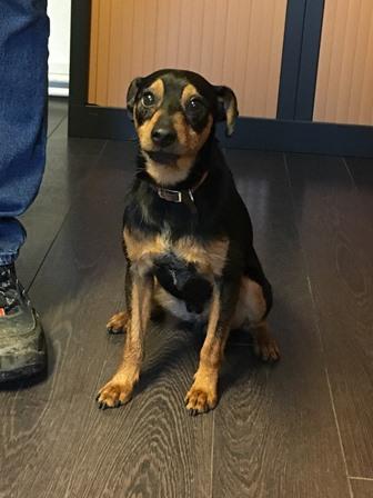 Recherche propriétaire d'un chien trouvé sur le territoire de la commune